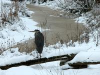 Birds, Mammals & Animals 3