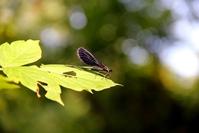 Dragonfly sitting on a leaf
