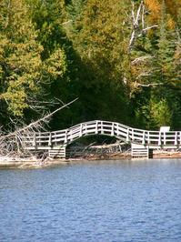 Little bridge in the woods