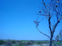 saddest tree