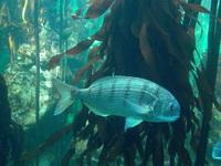 Underwater World 3