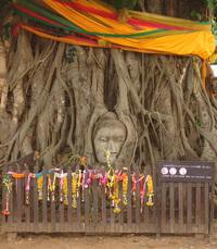 Buddha statue w tree