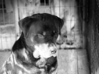misserable dog