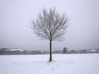 lonely winter tree