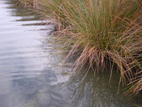 Wetlands 4