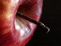 apple session 2