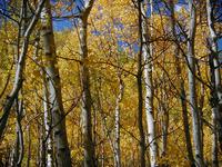 Autumn Landscape 11