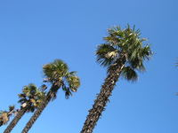 Palm trees in England