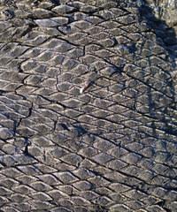 texture - grass tree trunk bur