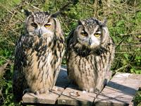 animals from wild garden