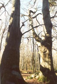 Masseys Forest Dublin