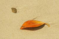 beach leaf 2