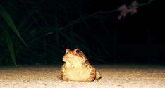 Frog on Sidewalk