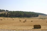 Harvest time 3