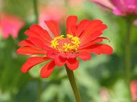 Orange Aging Flower