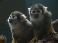 monkeys not monkeying around