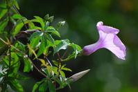 Backlit Purple Flower