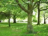 Belfast Botanic Gardens 1
