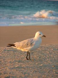 Sunlight Seagull