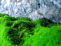 Mossy Carpet 5