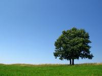 green_hill_ 5