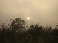 The Dusty Sky