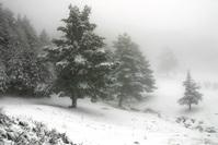 Snowie 5