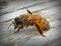 bee grooming