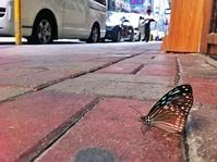 Butterfly in Hong Kong