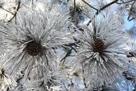 heavy frost 1
