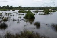 Lake Bera 2