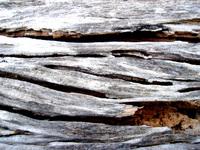 rotten wood 20