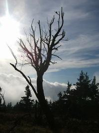 Tree torso