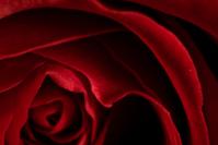 Rose interior