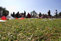 festival grass