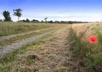 Dirt Road in Fields