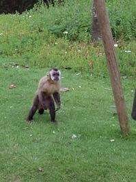 Monkey 02