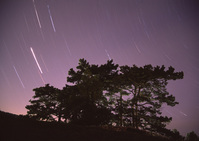 Pine & Sky