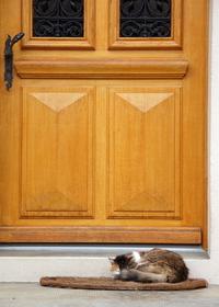 Sleeping guard cat