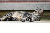 Willow Cat 8