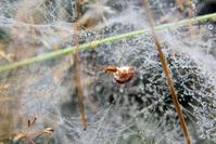 Spider 2
