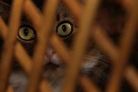 beto eyes