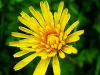 Flowers. 2