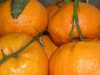 4 tangerines