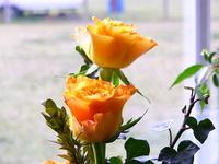 3 Roses 1