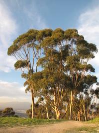 Arroyo Pescadro