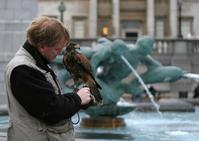 Hawk In Trafalgar Square