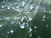 Gathering rain drops