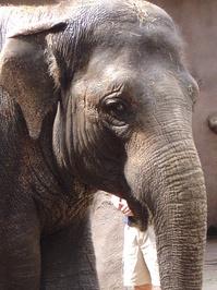 elephant wash 2