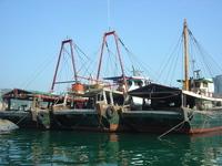 Hong Kong Boats